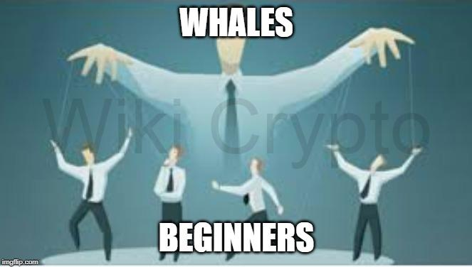 Whales  Manipulating Beginners